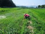 2011-08-04-104_600.jpg