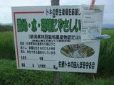 2011-08-07 235_600.jpg