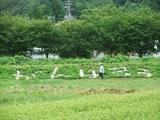2011-08-24 021_600.jpg