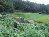 2011-09-01 005_600.jpg